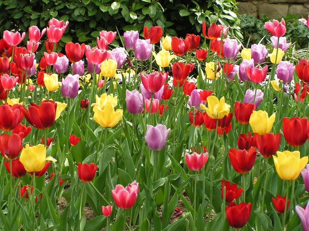 Jardines de los alemanes en girona jardines en espa a for Solados para jardines